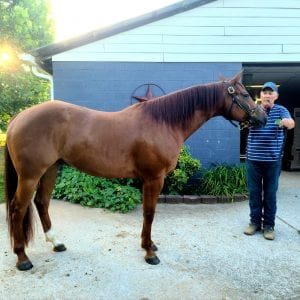 Touch of Sudden AQHA for sale